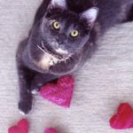 catnipheart